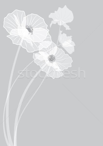 ポピー ベクトル 花 グレー 色 eps ストックフォト © tanais