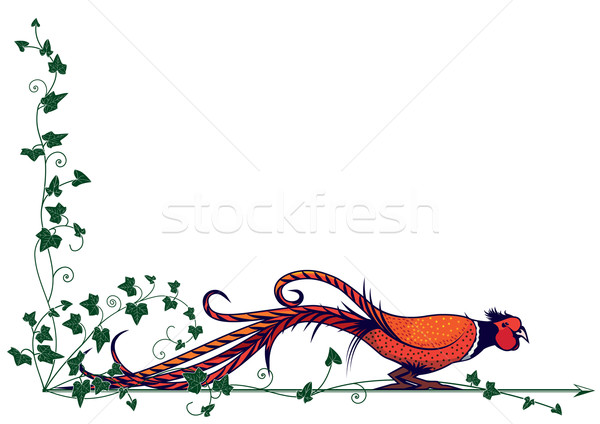 pheasant and ivy Stock photo © tanais