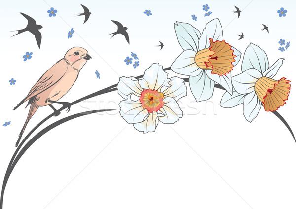 bird and narcissus Stock photo © tanais