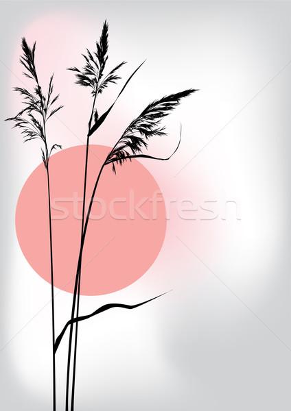 reed at sunset  Stock photo © tanais
