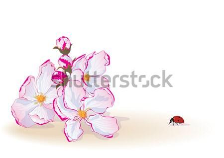 Alma virágok katicabogár vektor eps 10 Stock fotó © tanais