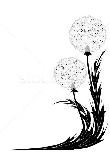 Pitypang sarok terv feketefehér színek eps Stock fotó © tanais