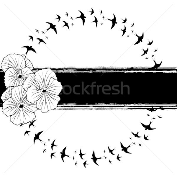 pansy and swallows Stock photo © tanais