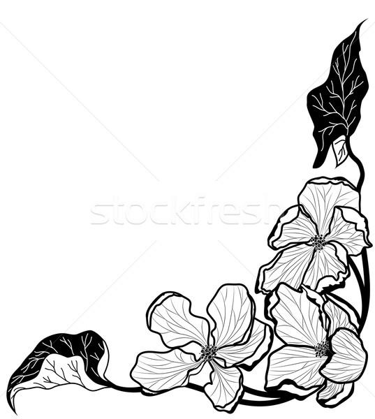 フローラル パターン ベクトル リンゴ 花 黒白 ストックフォト © tanais
