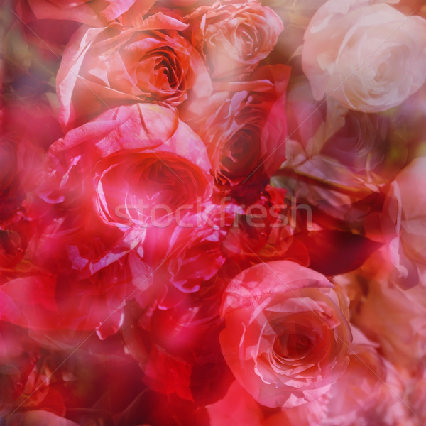 Rose abstract rosso rosa colori rosa Foto d'archivio © tanais