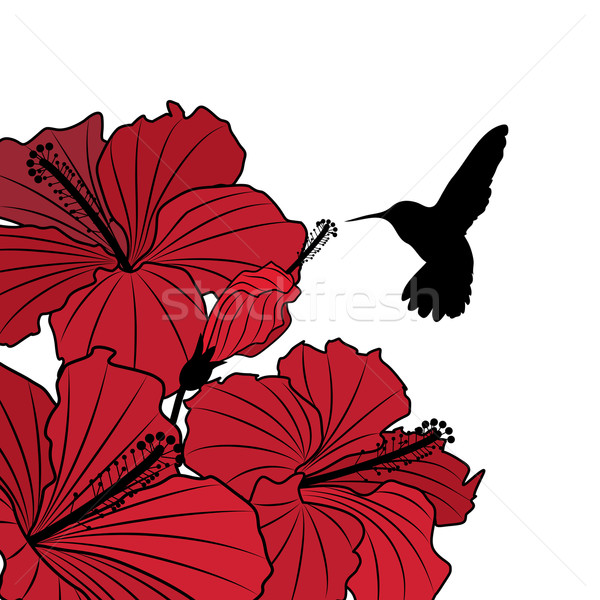 floral background with hibiscus and hummingbird Stock photo © tanais