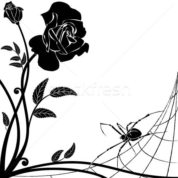 Rosa aranha vetor preto e branco natureza preto Foto stock © tanais