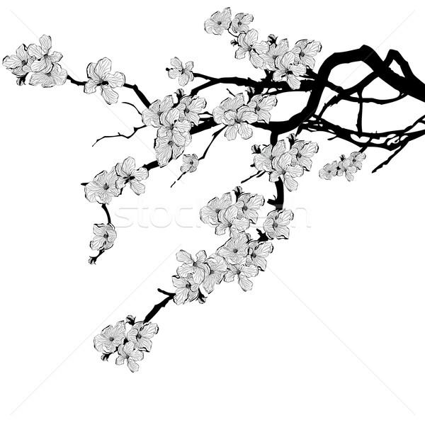 Tak kers boom zwart wit kleuren Stockfoto © tanais