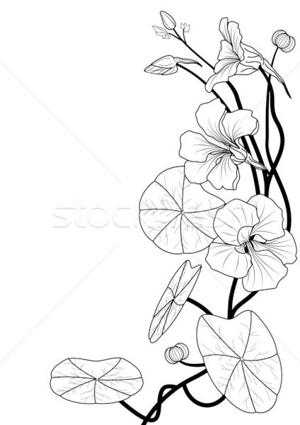 Zwart wit kleuren bloem achtergrond zwarte grafische Stockfoto © tanais