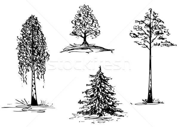 trees Stock photo © tanais