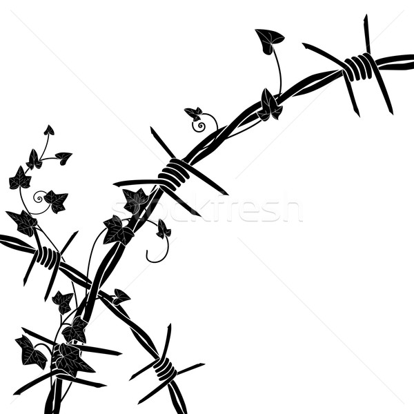 ivy with barbed wire Stock photo © tanais