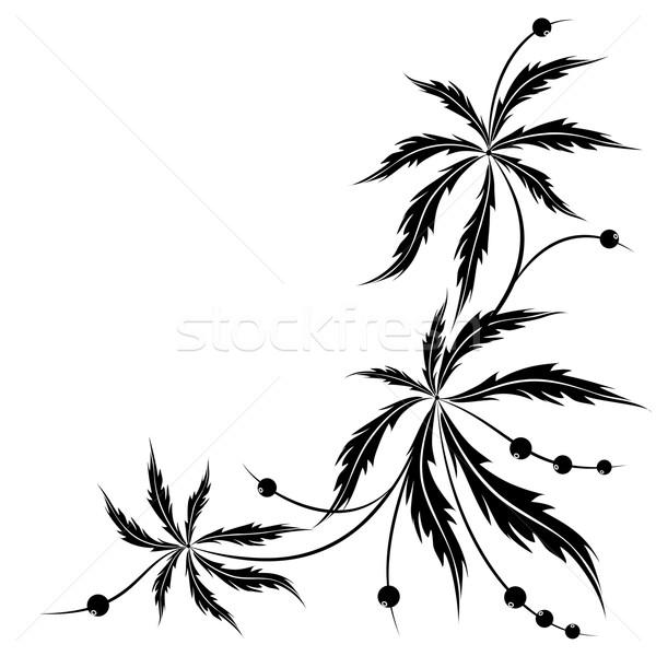 Abstract floreale vettore bianco nero colori natura Foto d'archivio © tanais
