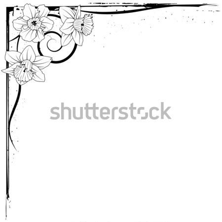 narcissus Stock photo © tanais