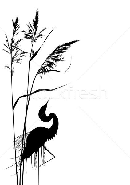Balıkçıl vektör siyah beyaz renkler sevmek soyut Stok fotoğraf © tanais