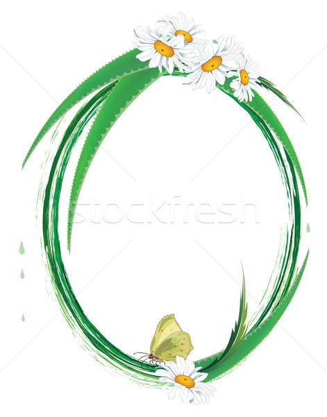 Keret aloe pillangó százszorszép vektor ovális Stock fotó © tanais