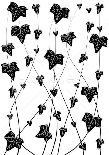 Hiedra vector rama blanco negro colores negro Foto stock © tanais
