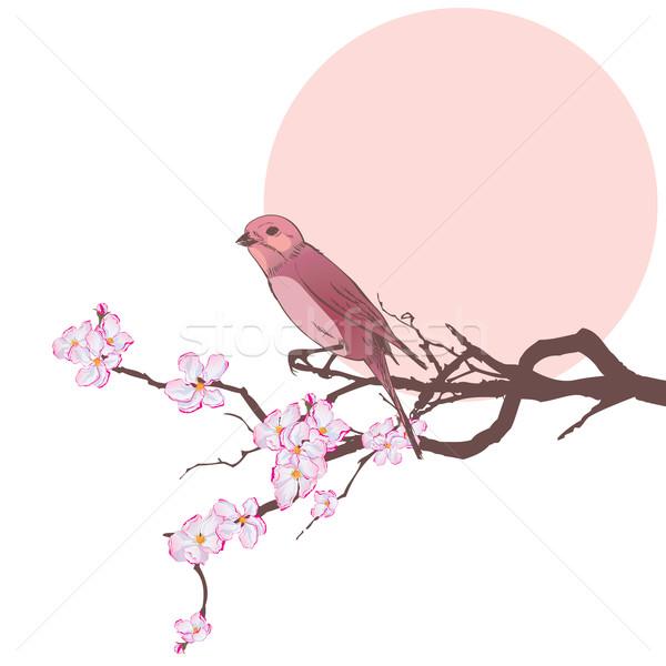 Madár ág cseresznye fa eps 10 Stock fotó © tanais