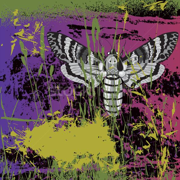 death's head hawk moth Stock photo © tanais
