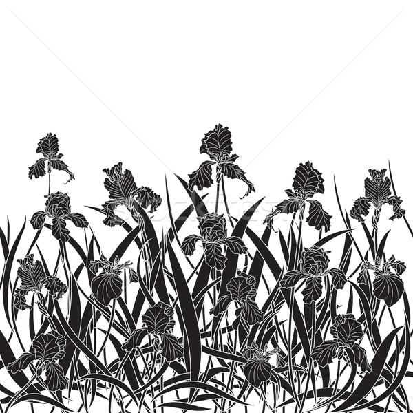 irises Stock photo © tanais