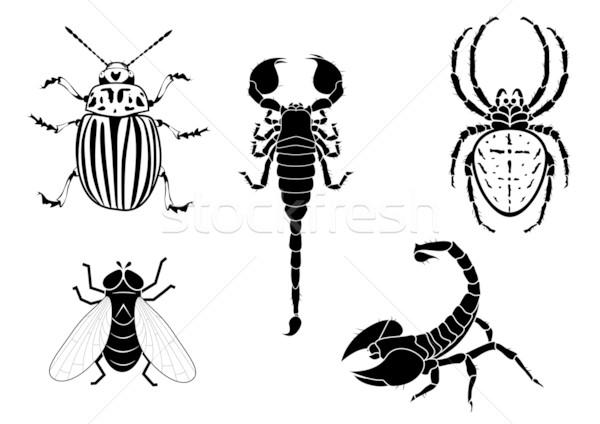 Batata besouro voar escorpião aranha conjunto Foto stock © tanais