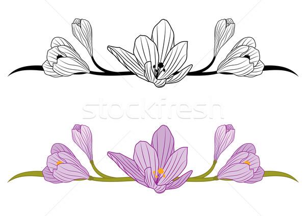 Açafrão conjunto vetor flores preto Foto stock © tanais