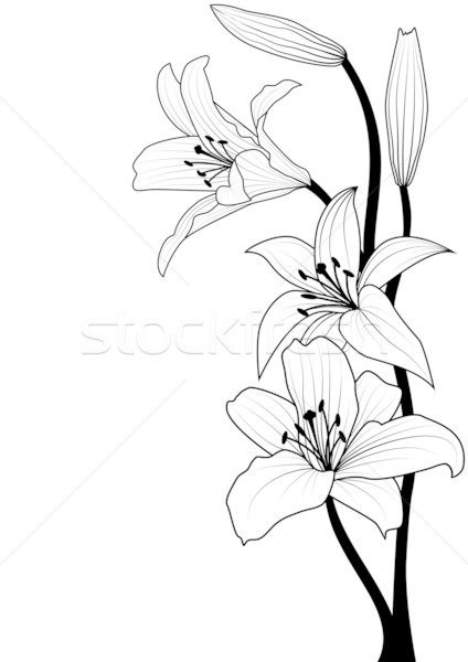 Liliom feketefehér színek fekete fehér minta Stock fotó © tanais