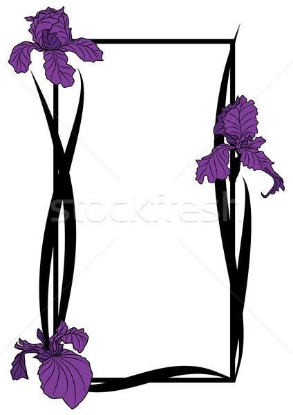 vector frame with irises Stock photo © tanais