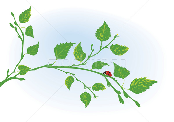 branch of birch and ladybird Stock photo © tanais