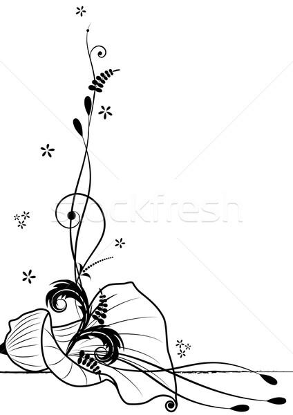 calla lily Stock photo © tanais