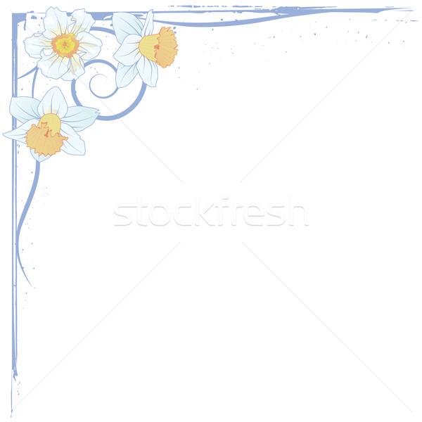 narcissus border Stock photo © tanais