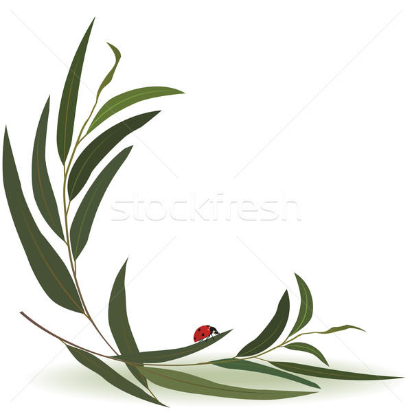 ladybird and eucalyptus Stock photo © tanais