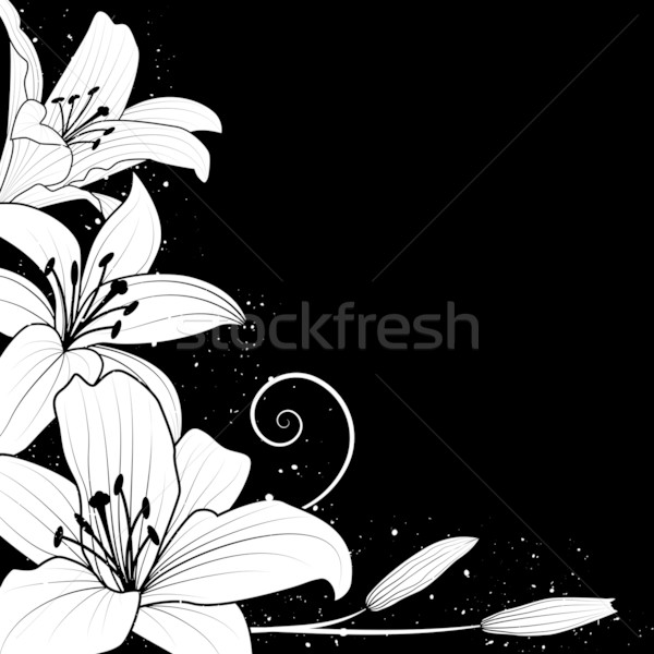 Stock photo: Vector illustration with flowers of lily in black and white colors