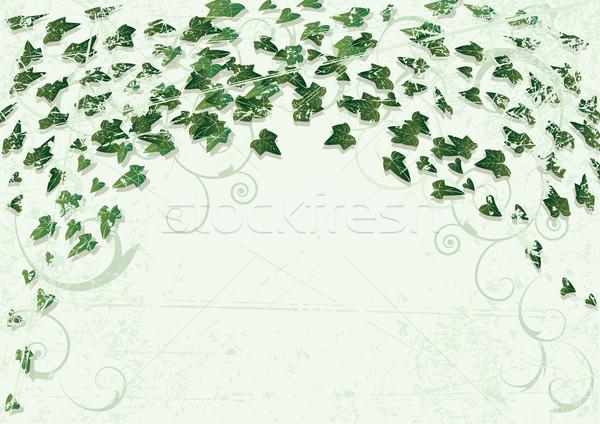 Sarmaşık vektör grunge yaprakları ağaç arka plan Stok fotoğraf © tanais