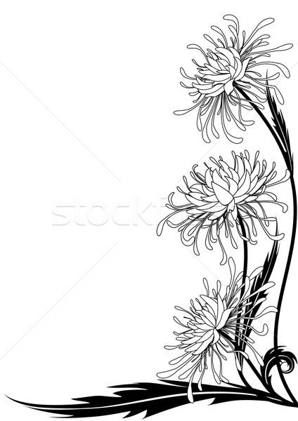 Blume Chrysantheme floral Ecke Design schwarz weiß Stock foto © tanais