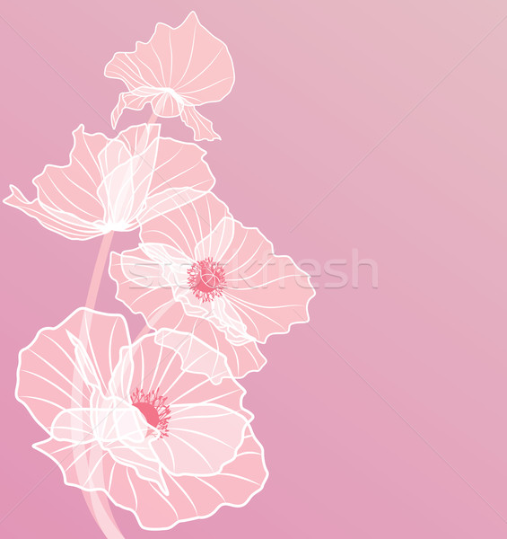 Rózsaszín pipacsok vektor virágok színek eps Stock fotó © tanais