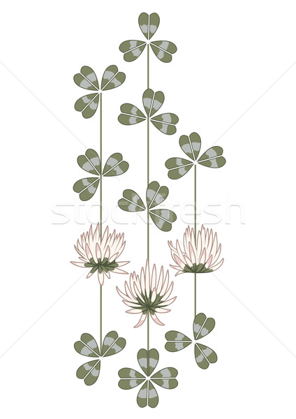 flowers of clover Stock photo © tanais