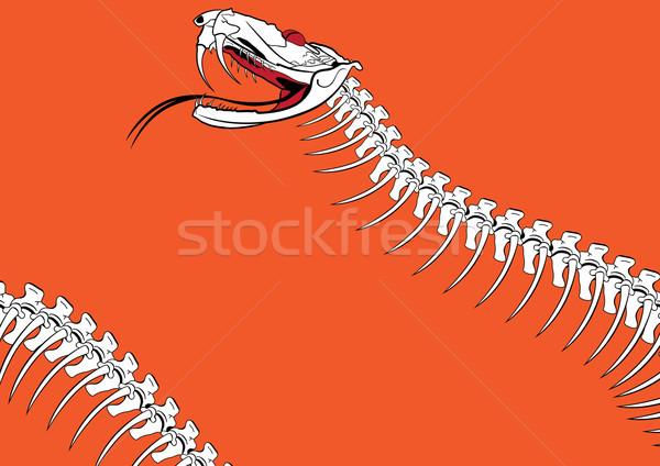 venomous snake Stock photo © tanais