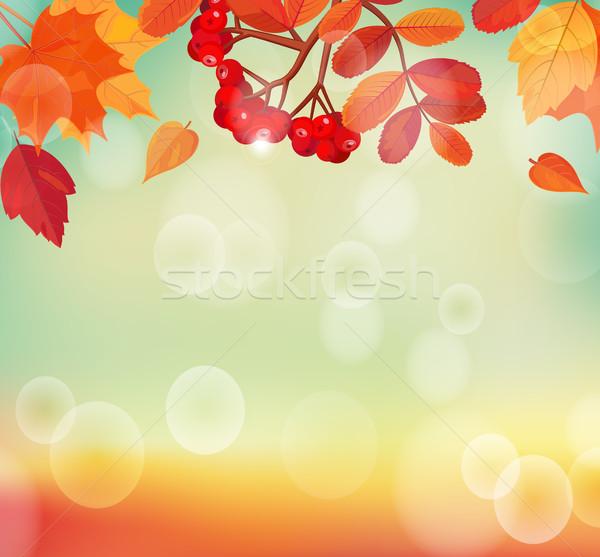осень красочный листьев прибыль на акцию 10 солнце Сток-фото © tandaV