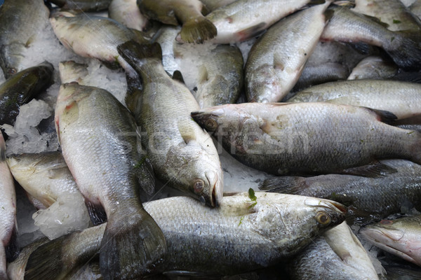 Milk fish in the market Stock photo © tang90246