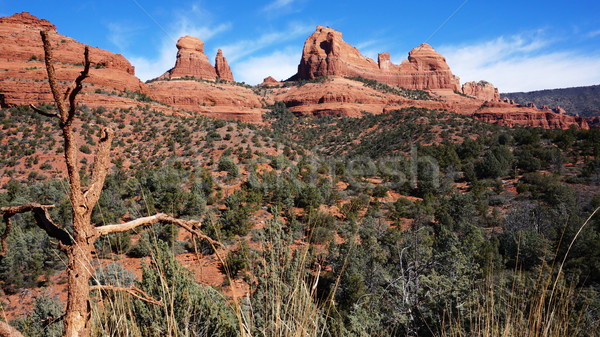Wildernis berg Arizona USA natuur woestijn Stockfoto © tang90246