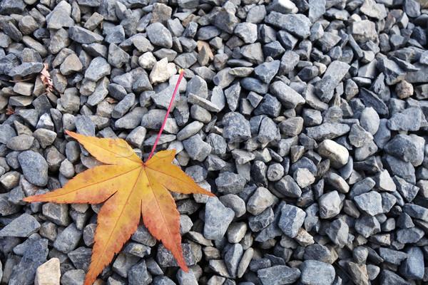 Amarelo bordo folhas pedra textura estrada Foto stock © tang90246