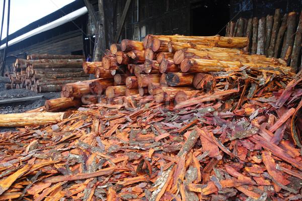 Mangrove trees  used to make charcoal. Stock photo © tang90246
