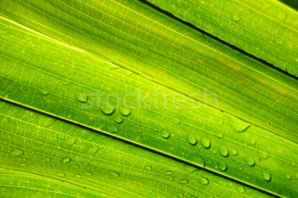 água gotículas folha verde verde cair Foto stock © tang90246