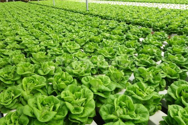 коммерческих теплица овощей воды технологий саду Сток-фото © tang90246