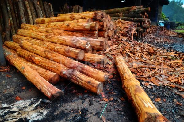 Ağaç kömür fabrika kullanılmış orman Stok fotoğraf © tang90246