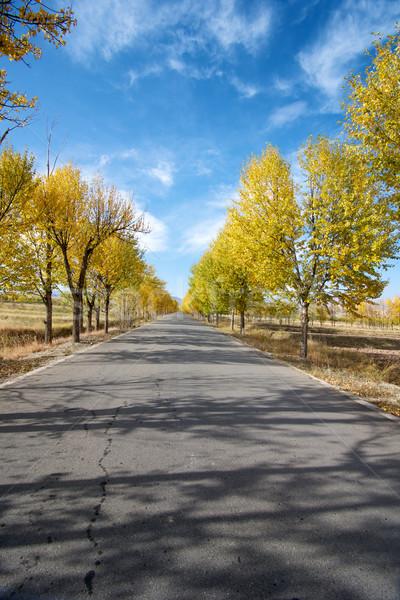 дерево аллеи осень природы Сток-фото © tangducminh