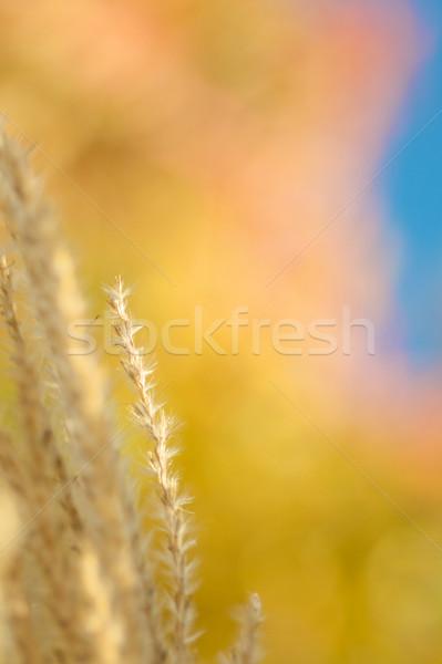 Renk düşmek doğa toplama güzel kuzey Stok fotoğraf © tangducminh