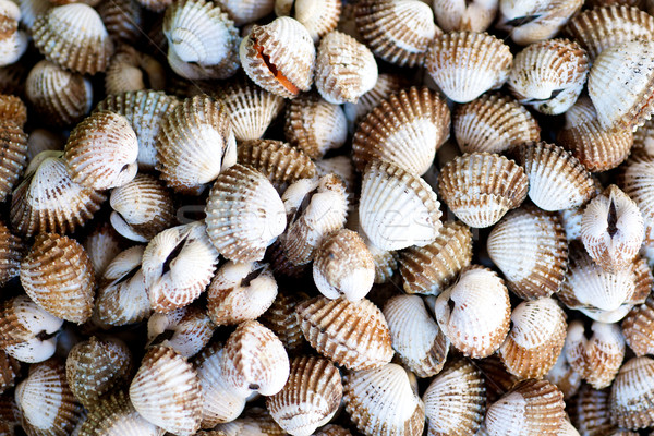 Raw Clams in the market Stock photo © tangducminh