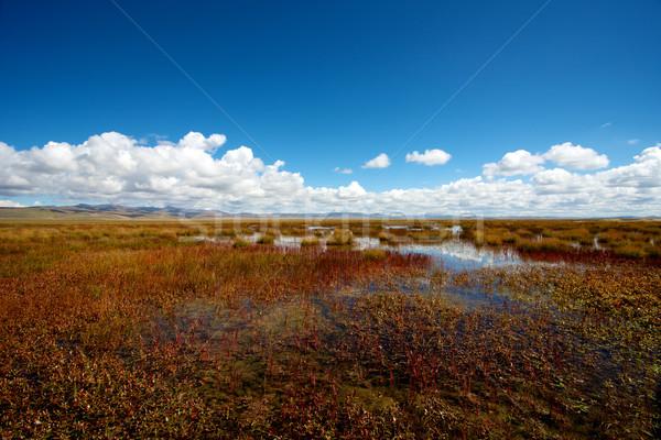 Beautiful Flower Lake Stock photo © tangducminh