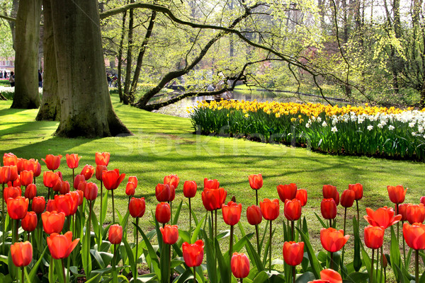 Beautiful park in spring with pond Stock photo © tannjuska